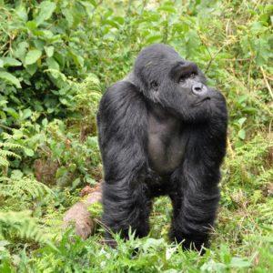 Dal Rwanda